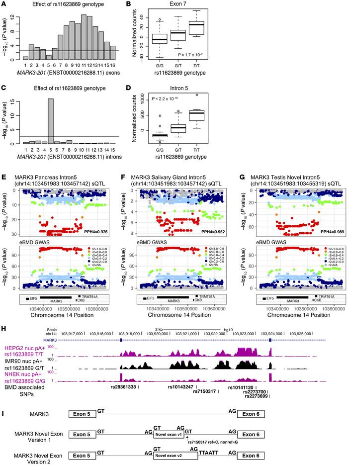 Genetically regulated alterations in MARK3 splicing colocalize with an e...