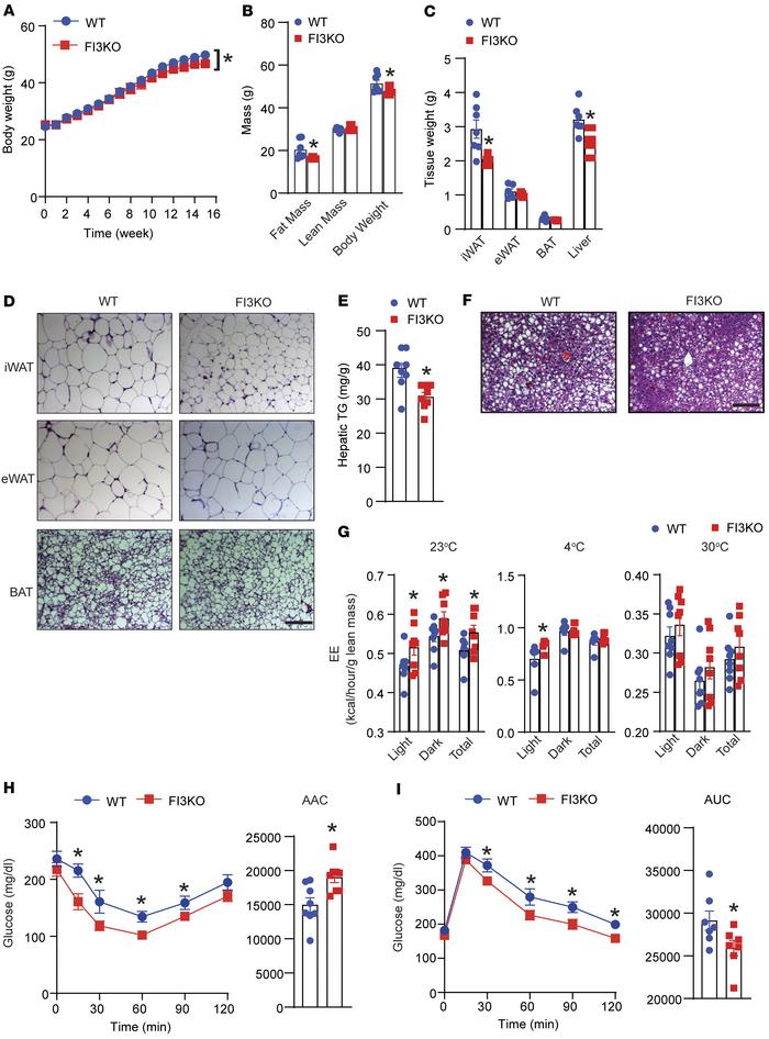 Adipocyte-specific IRF3 deficiency attenuates HFD-induced obesity. (A) B...