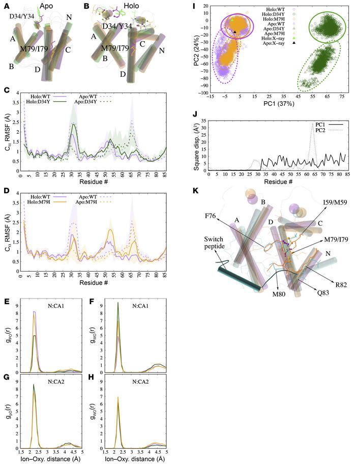Results of the molecular dynamics simulations. (A and B) Superposition o...