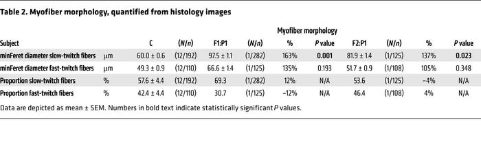 Myofiber morphology, quantified from histology images