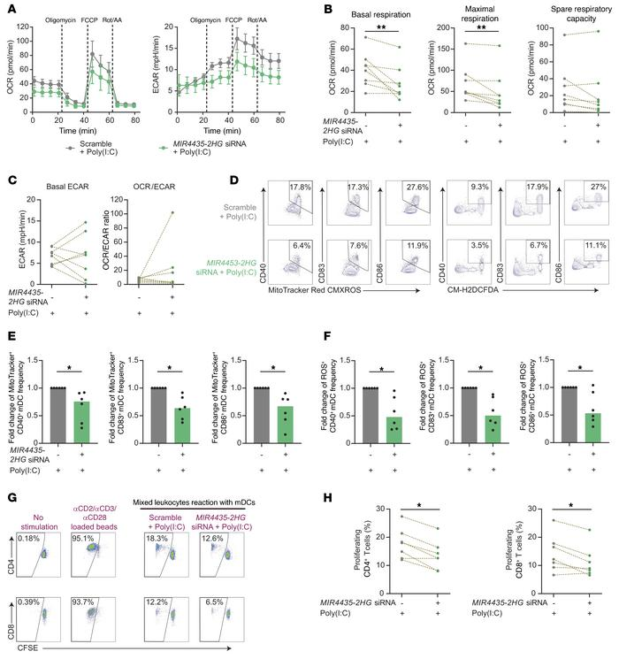 MIR4435-2HG modulates functional metabolic activities in mDCs. (A) OCR ...