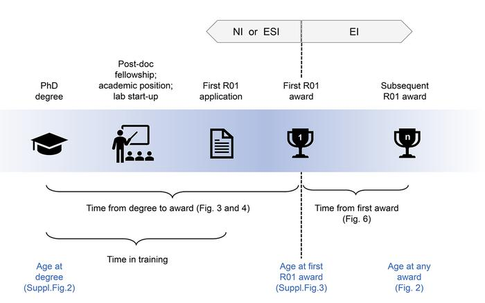 Schematic of career stages.