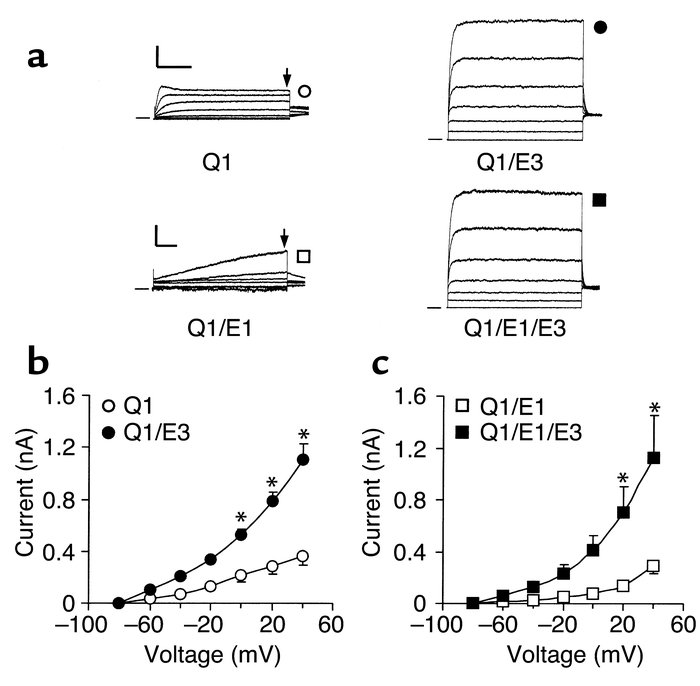 KCNQ1-KCNE3 coexpression in CHO cells. (a) Original current traces of KC...