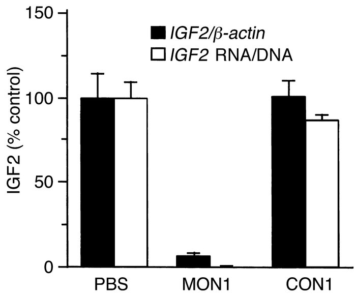 IGF2 expression in human HSK 09 cells treated with the methylated oligon...