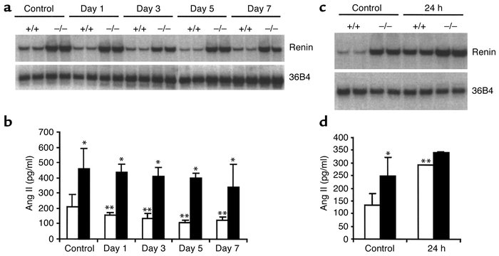 Effect of high sodium load and volume depletion on renin mRNA expression...
