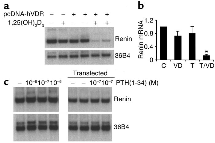 Suppression of renin mRNA expression by 1,25(OH)2D3 in As4.1 cells. (a) ...