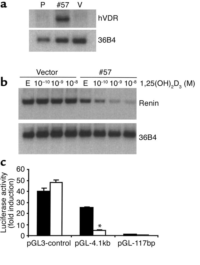 1,25(OH)2D3 suppresses renin gene transcription. (a) Expression of hVDR ...