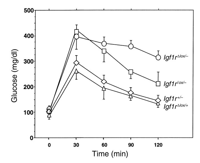 Intraperitoneal glucose tolerance tests in mice lacking IGF1R in β cells...