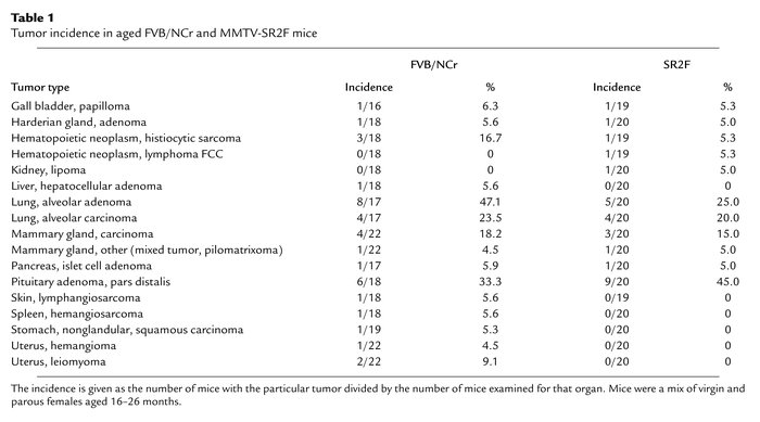 Tumor incidence in aged FVB/NCr and MMTV-SR2F mice