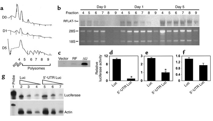 RFLAT-1 5′-UTR inhibits translation in vitro and in vivo. (a) Absorbance...