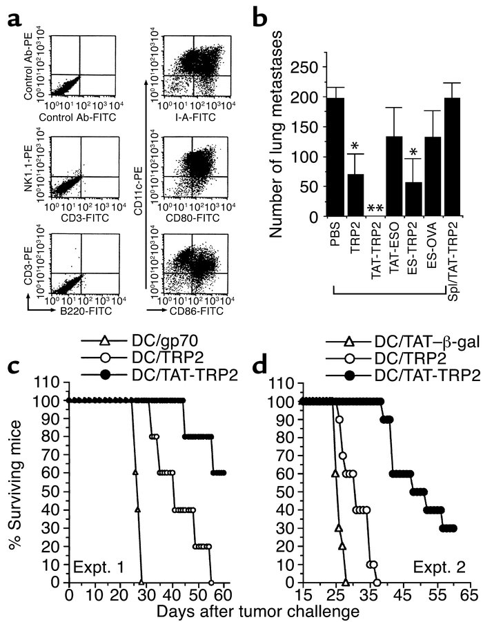Intracellular delivery of TRP2 peptide into DCs for the generation of po...