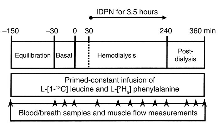 Schematic diagram of the metabolic study-day protocol. Arrowheads denote...