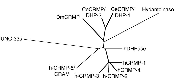 A phylogenic tree, showing the relationships between the vertebrate and ...