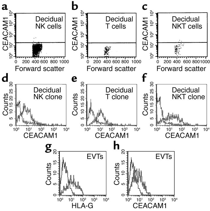 CEACAM1 staining of decidual lymphocytes. Decidual lymphocytes were isol...