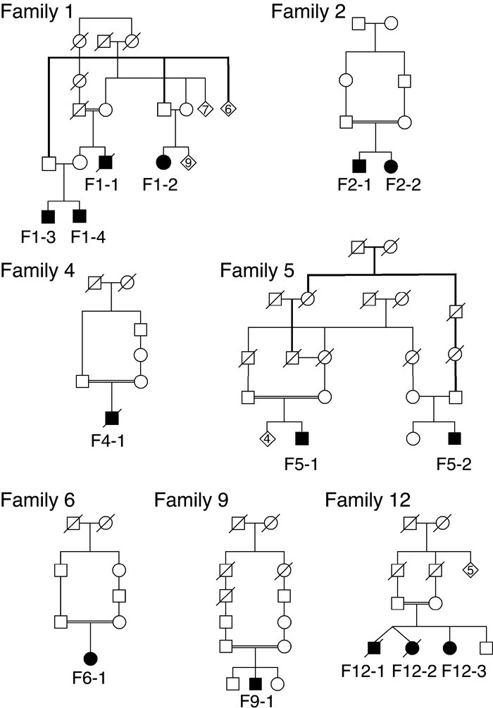 The pedigrees of the families with known consanguinity or more than one ...