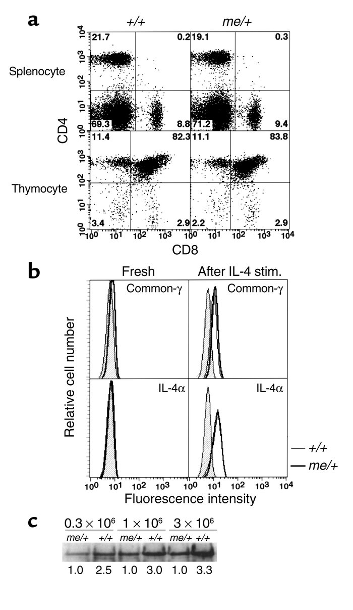 Phenotypically normal naive CD4 T cells developed in me/+ mice. (a) Repr...