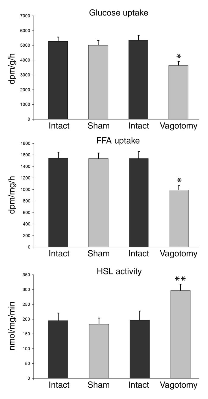 Uptake of glucose and FFA, and HSL activity in adipose tissue after para...