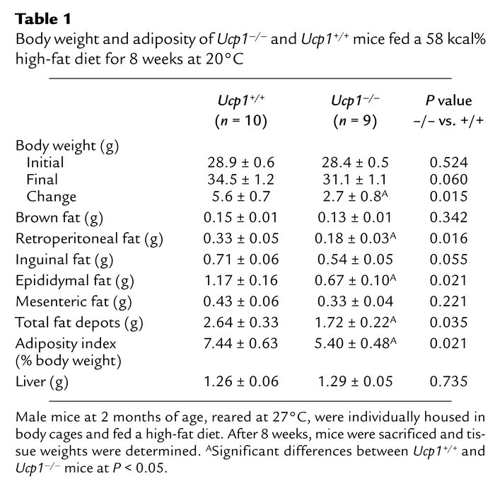 Body weight and adiposity of Ucp1–/– and Ucp1+/+ mice fed a 58 kcal% hig...