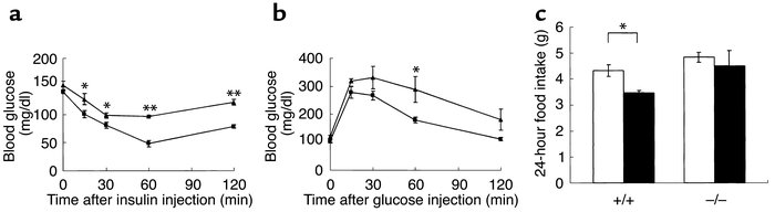 Insulin and glucose tolerance test for H3+/+ mice (squares) and H3–/– mi...
