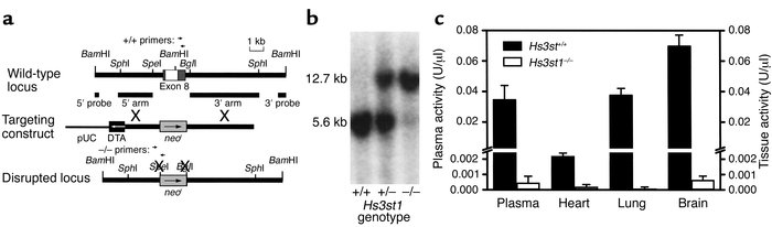 Disruption of the mouse Hs3st1 locus. (a) Gene-targeting strategy. Exon ...