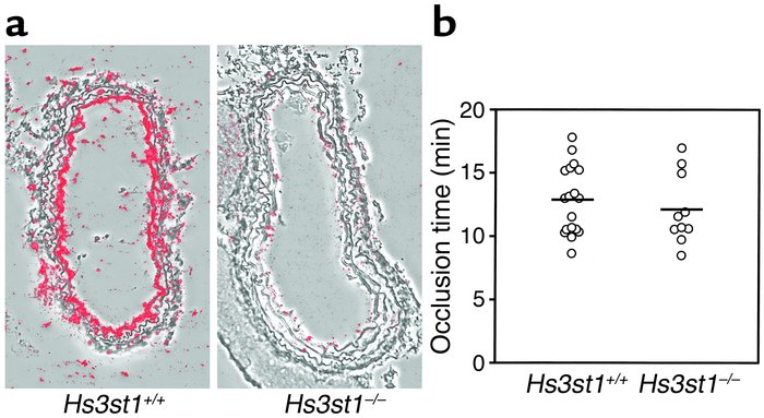 Hs3st1 disruption reduces carotid artery AT-binding sites but does not a...