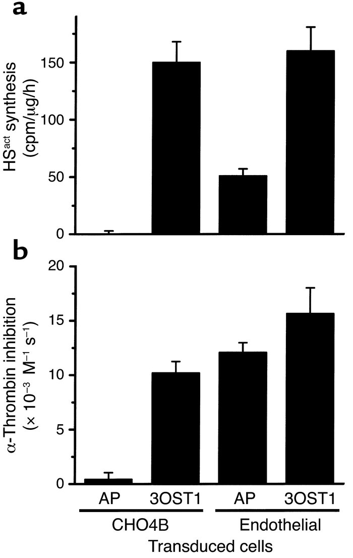 Overproduction of HSact in endothelial cells does not augment cell surfa...