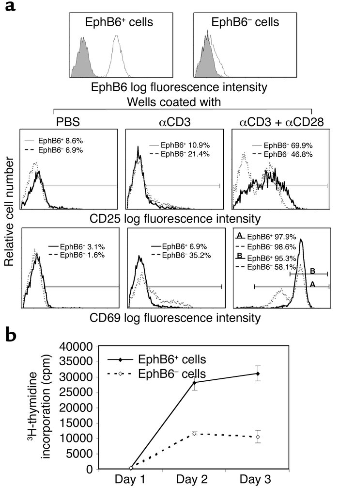Activation marker expression and proliferation of EphB6+ versus EphB6– T...
