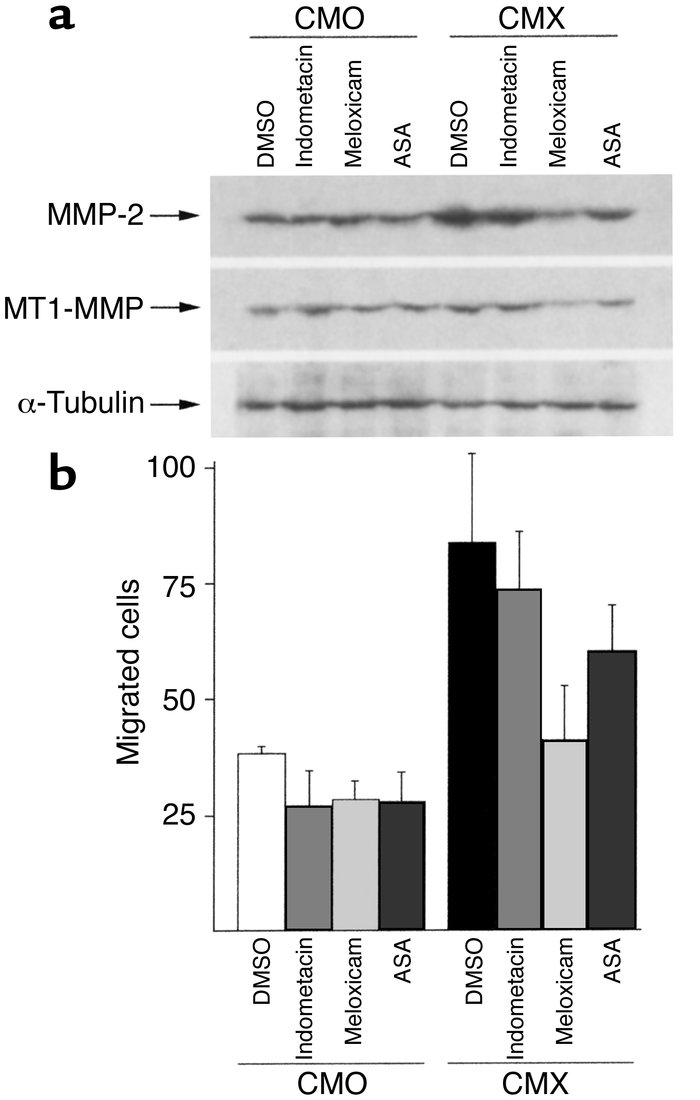 Effect of different NSAIDs on MMP-2 activation, MT1-MMP expression, and ...
