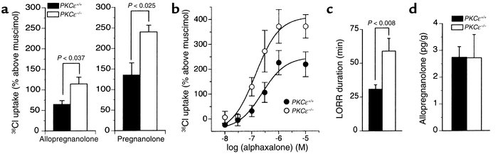 Responses to neurosteroids in PKCε-null mice. (a) Muscimol-stimulated 36...