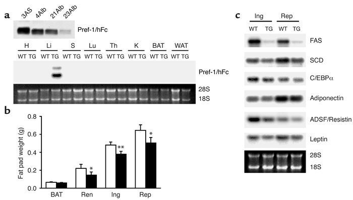 Reduced fat pad weight and decreased expression of adipocyte markers in ...