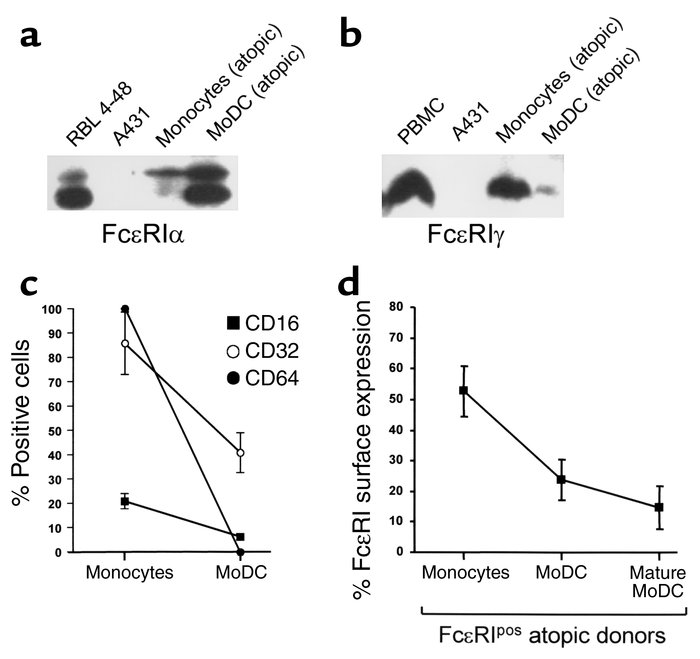 DCs generated from monocytes accumulate FcεRIα, whereas FcεRIγ and Fcγ r...