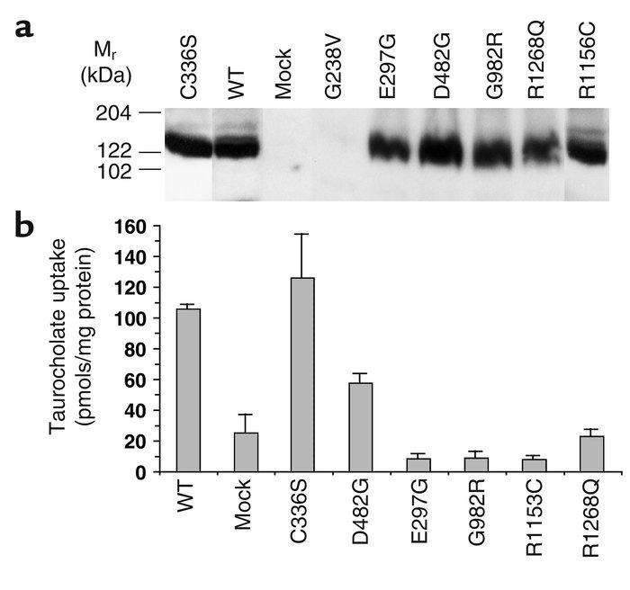 JCI - The role of bile salt export pump mutations in