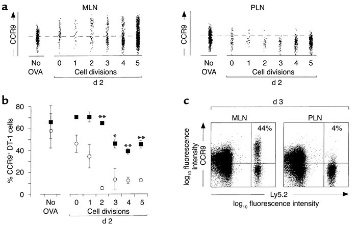 CCR9 is maintained on a subset of OT-1 cells following activation in MLN...