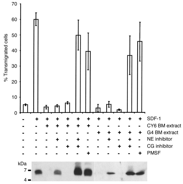 Pretreatment of BM extracellular fluids from mobilized mice with a speci...