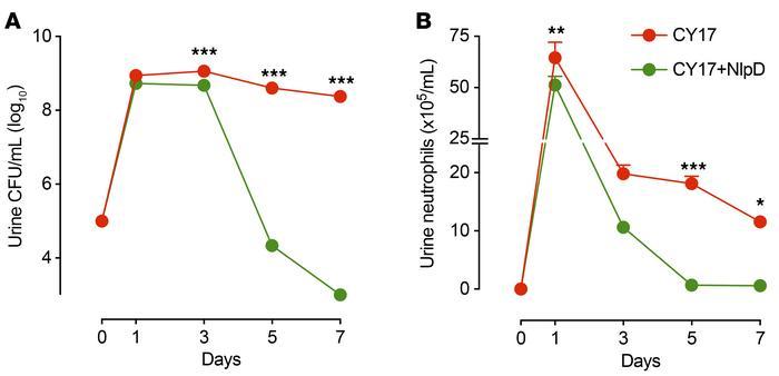 重组NlpD治疗可加速CY17感染的细菌清除。。。