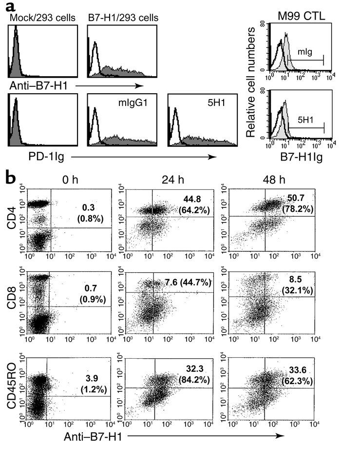 Preferential expression of B7-H1 mAb on activated CD4+ T cells. (a) On t...