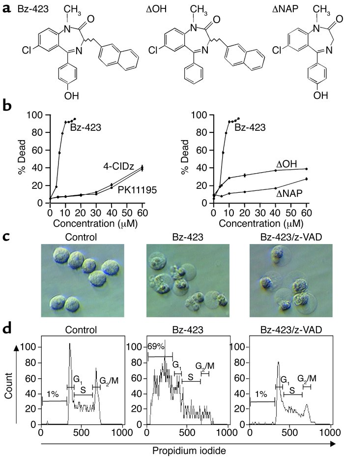 (a) Structure of Bz-423 and inactive congeners. (b) Effect of Bz-423, 4′...