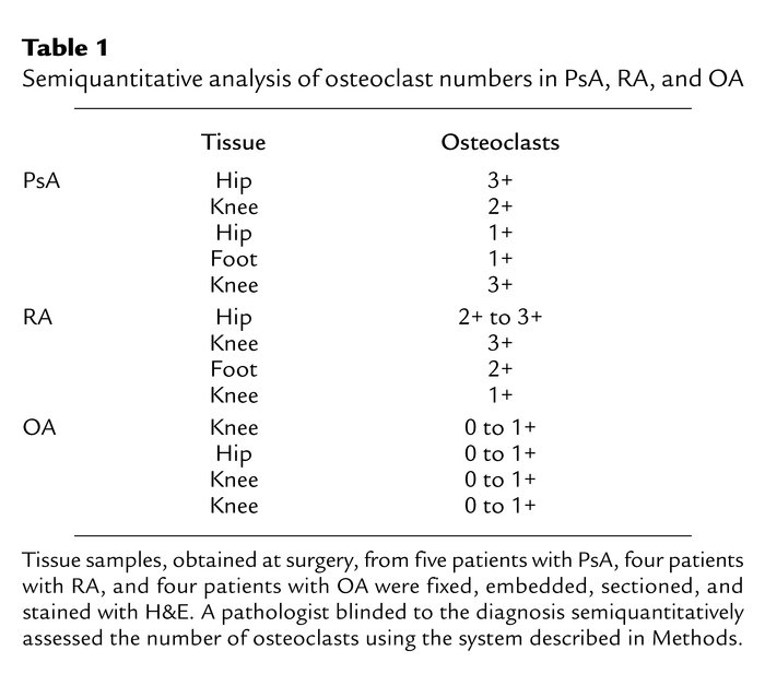 Semiquantitative analysis of osteoclast numbers in PsA, RA, and OA
