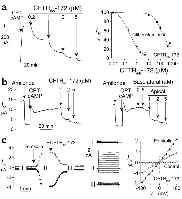 Electrophysiological analysis of CFTR inhibition. (a) Left: CFTRinh-172 ...