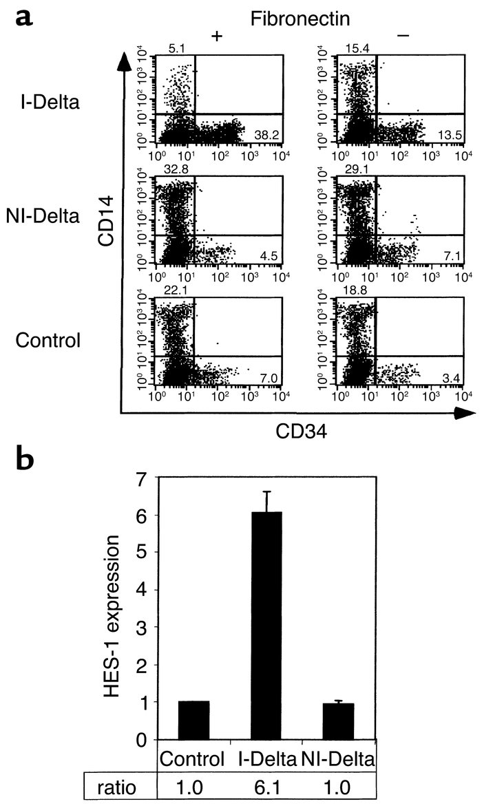 Immobilized Delta1ext-myc specifically activated Notch signaling and eff...