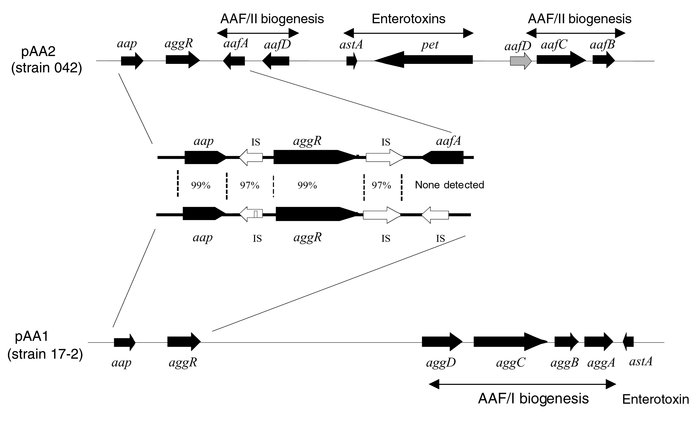 Map of aap-aggR loci from strains 042 (producing AAF/II) and 17-2 (produ...