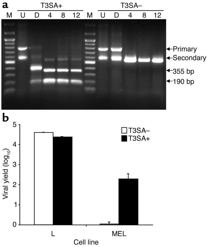Genotypic and phenotypic characterization of virus isolated from mice fo...