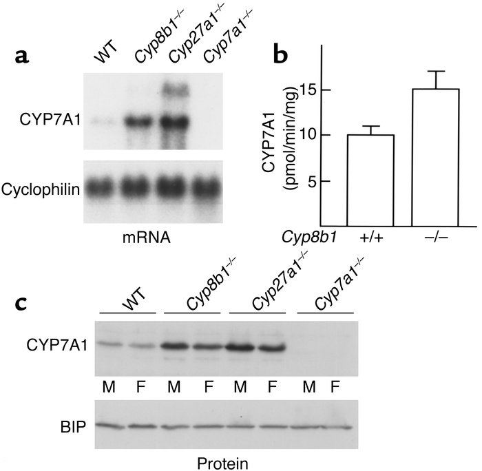 Expression of CYP7A1 in wild-type and knockout mice. (a–c) CYP7A1 mRNA, ...