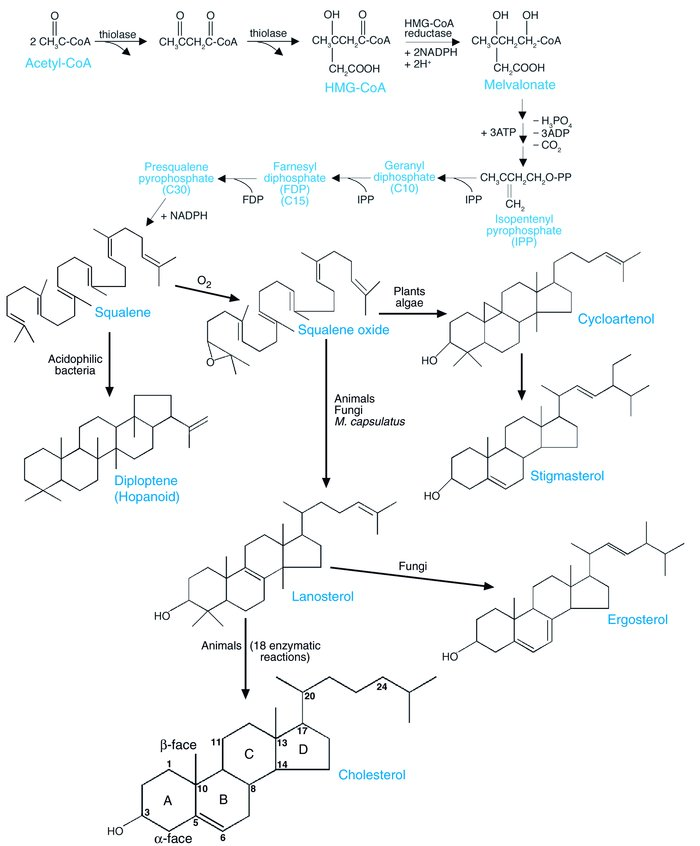 Biosynthesis of steroids in various species. Adapted from ref. 43 with p...