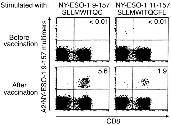 M 9-157+ CD8+ T cell responses in sarcoma patients receiving the NY-ESO-...