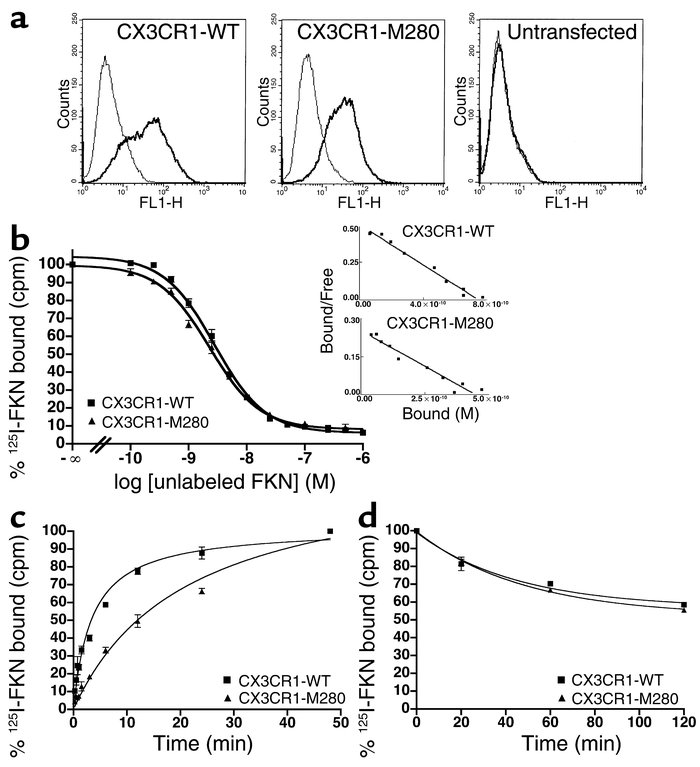 CX3CR1-M280 binds FKN with delayed kinetics. (a) Receptor expression on ...