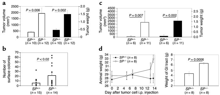 Tumor growth is enhanced in SPARC null mice. SP+/+ and SP–/– mice were i...
