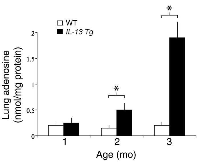 Lung adenosine levels are increased in IL-13 Tg mice. Adenosine levels w...