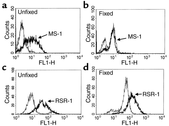 Recognition of a TSHR conformational epitope by MS-1. MS-1 recognized th...