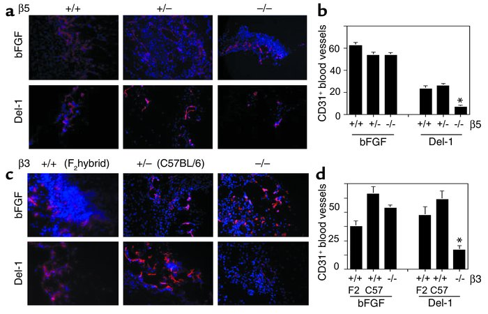 Integrin αvβ5 is required for Del-1– but not bFGF-mediated angiogenesis....